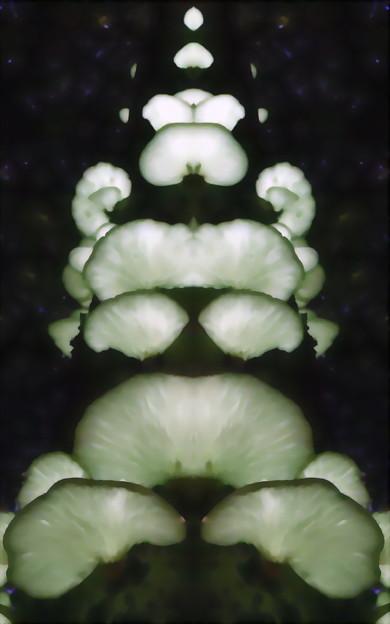 月夜茸-05