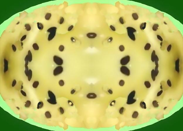 キウイフルーツ_チーズ焼き-01b