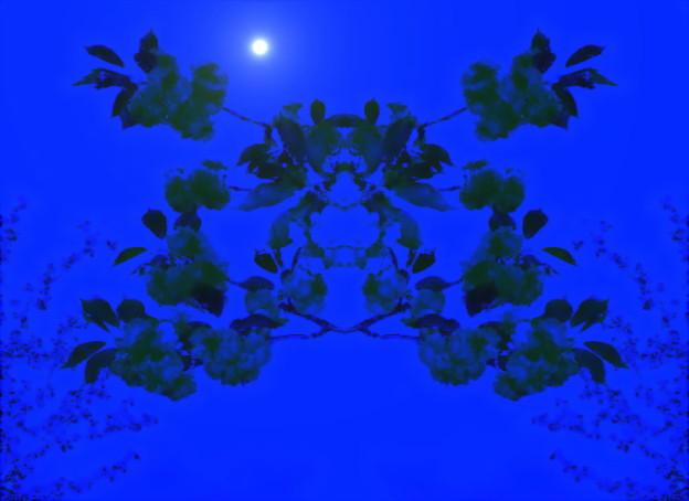 木霊_夜に咲く花-01(1-1)