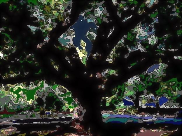 楡の木蔭-03