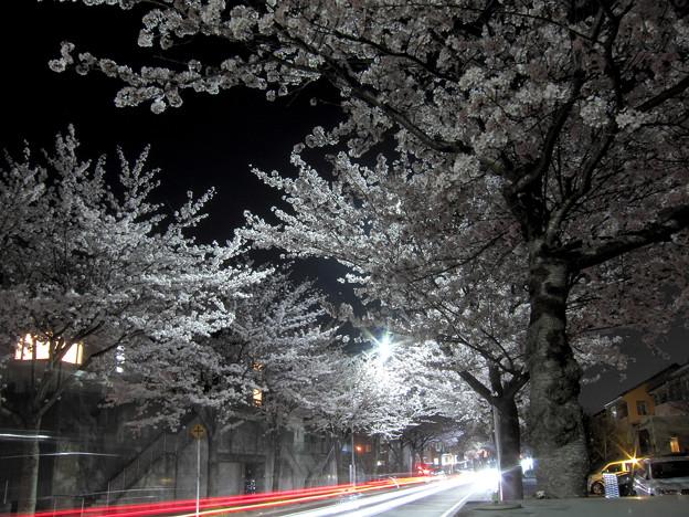 夜桜と光の川