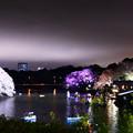 写真: 夜桜舞う