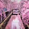 写真: 桜川