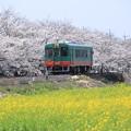 写真: 真岡鉄道 普通車両