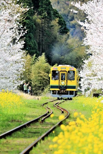 写真: いすみ鉄道