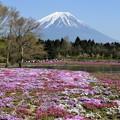 写真: spring