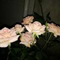 薔薇家の一族?