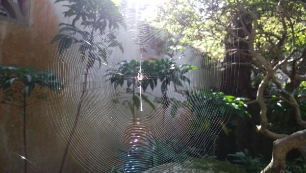 蜘蛛のアート