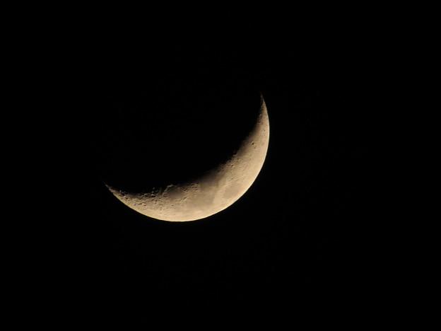写真: 月齢5.1