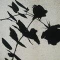 花 影 (シルエット)