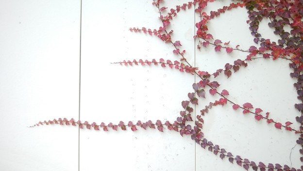 蔦のアート