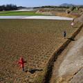 写真: 三崎の案山子