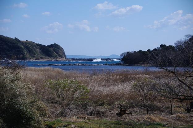 江奈湾の干潟