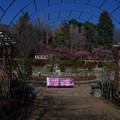 Photos: 里美公園