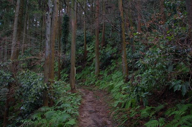二子山の森