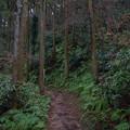 写真: 二子山の森