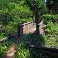金比羅尾根の登山道
