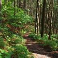 写真: 城峯山の表参道コース