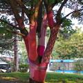 デアークフェレンツ広場駅の木