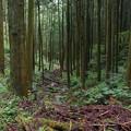 Photos: 三滝川