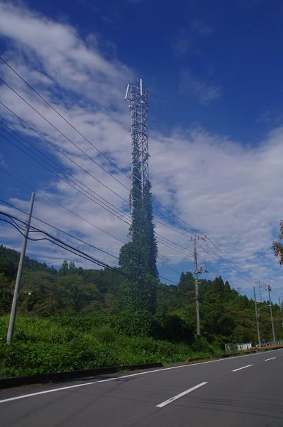 埼玉県道61号線沿いの鉄塔