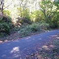 写真: 登山道と林道