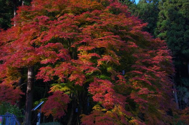 大塚山登山口の紅葉