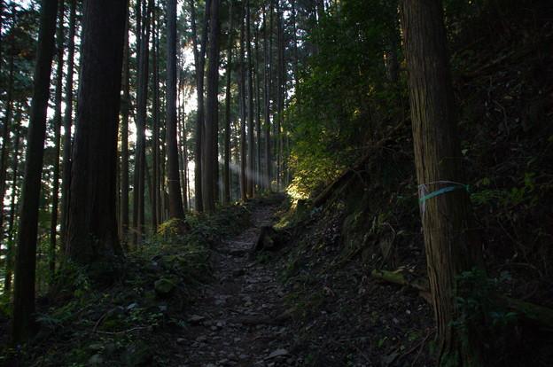 大塚山の登山道