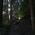 Photos: 大塚山の登山道