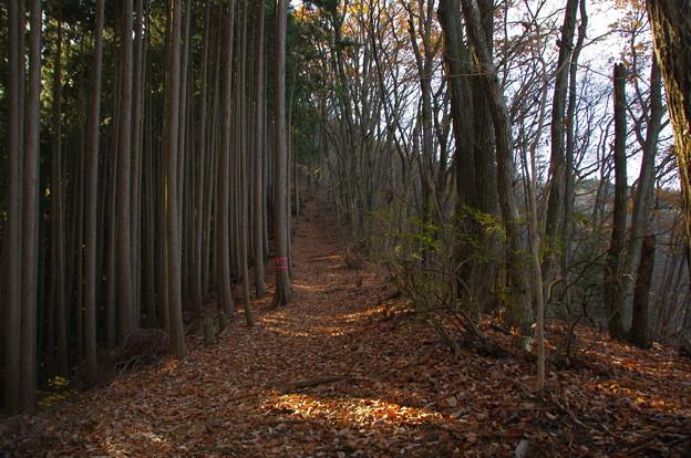 大塚山の落ち葉の道