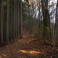 Photos: 大塚山の落ち葉の道