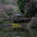 Photos: 笠森観音の弁天池