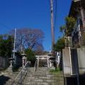 Photos: 森山神社