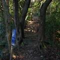 桜山古墳群への道