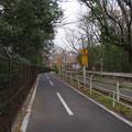 多摩湖自転車歩行車道