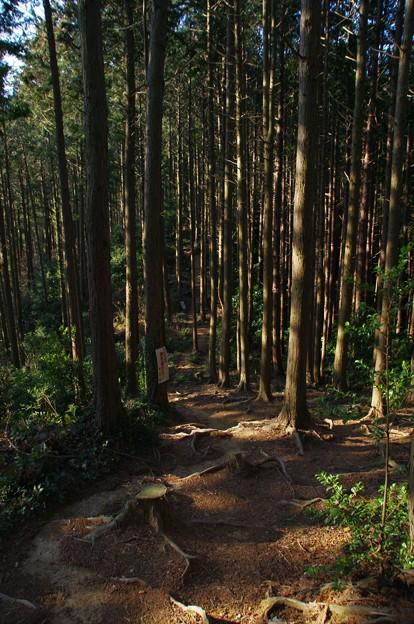 大高取山の登山道