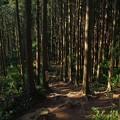 Photos: 大高取山の登山道
