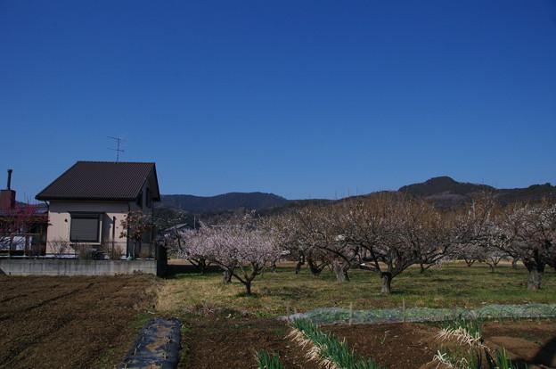 西山高取と大高取山
