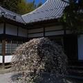 Photos: 最勝寺