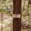 Photos: 茶嶽山(標高450m)
