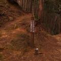 越上山への道