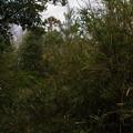 正山頂上の笹ヤブ