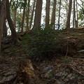 小倉城跡の緑色片岩の石垣