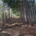 Photos: 笠山への道