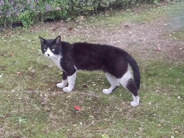 _170622 089 チョビヒゲ黒白鉢割れ猫