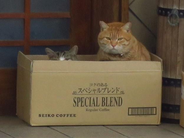 _180205 008 猫 スペシャルブレンド