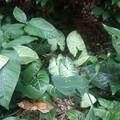 Photos: _180502 021 日赤病院ロビーの植物