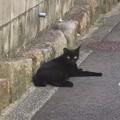 _180817 109 ややだらけ気味の黒猫