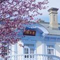 写真: 春の豊平館