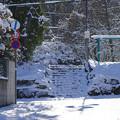 Photos: 冬・到来